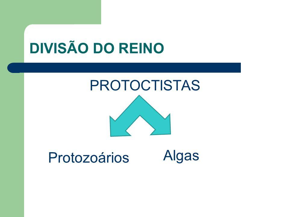 DIVISÃO DO REINO PROTOCTISTAS Protozoários Algas