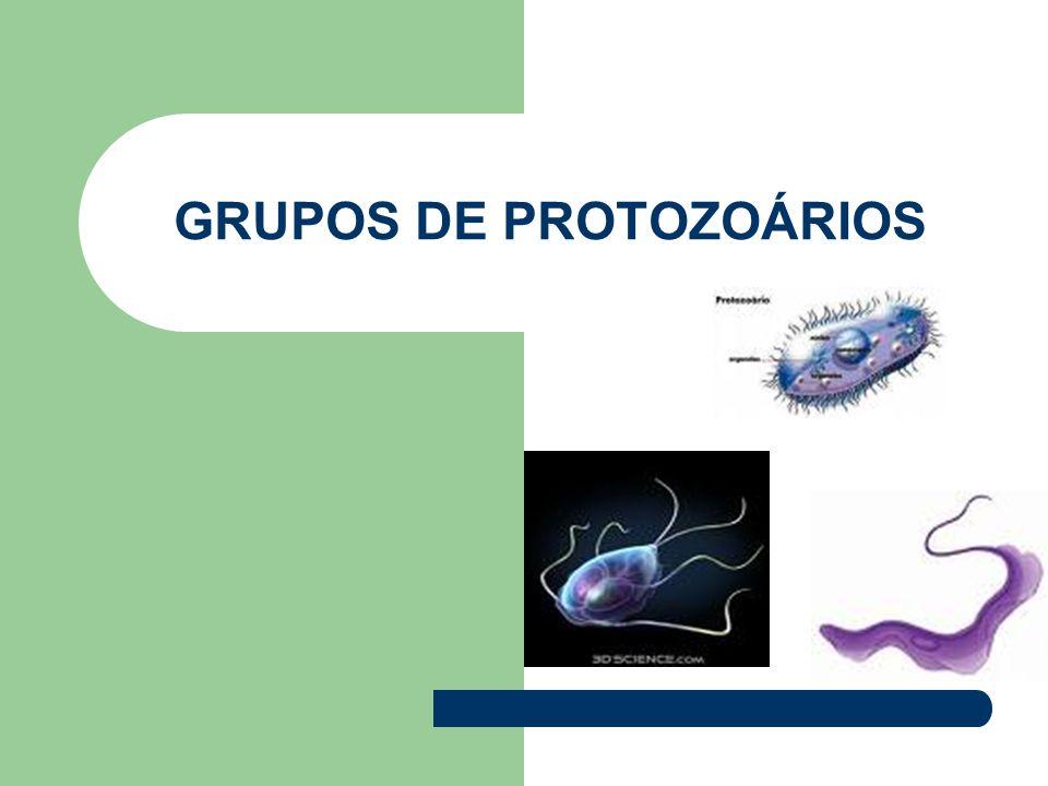 GRUPOS DE PROTOZOÁRIOS