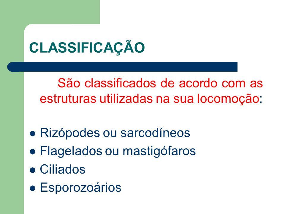 CLASSIFICAÇÃO São classificados de acordo com as estruturas utilizadas na sua locomoção: Rizópodes ou sarcodíneos Flagelados ou mastigófaros Ciliados