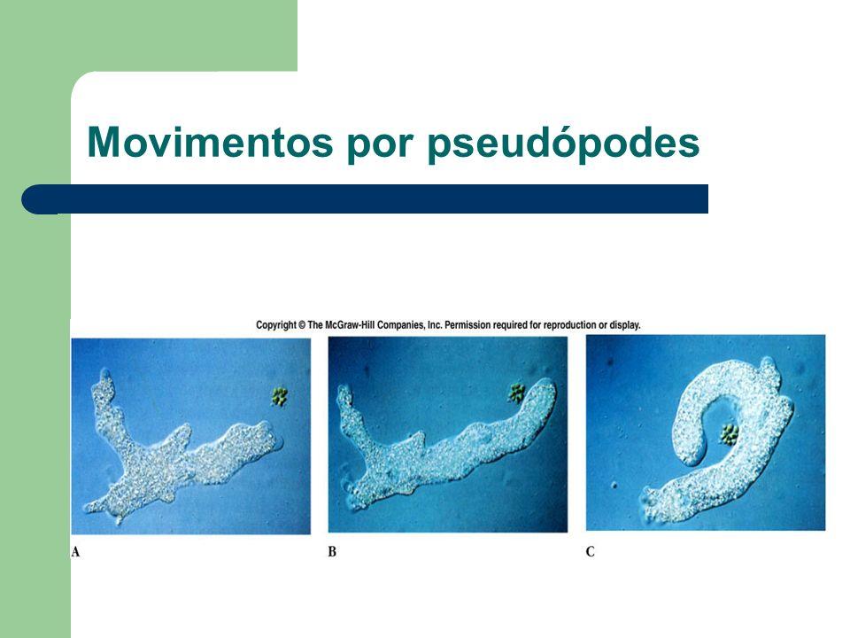 Movimentos por pseudópodes