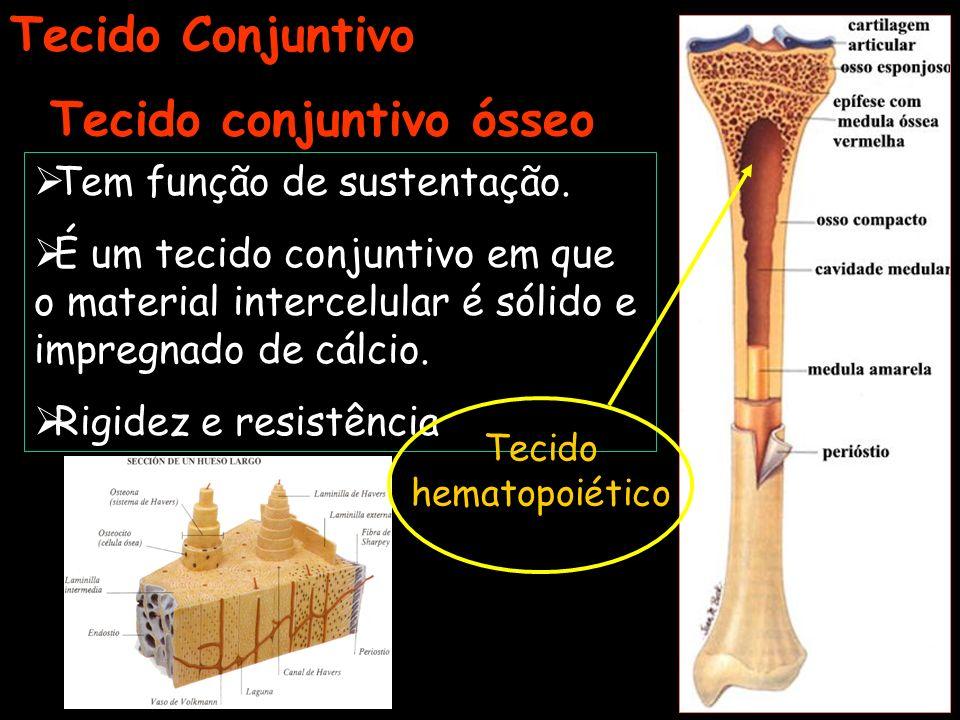 Tecido conjuntivo ósseo Tecido Conjuntivo Tem função de sustentação. É um tecido conjuntivo em que o material intercelular é sólido e impregnado de cá