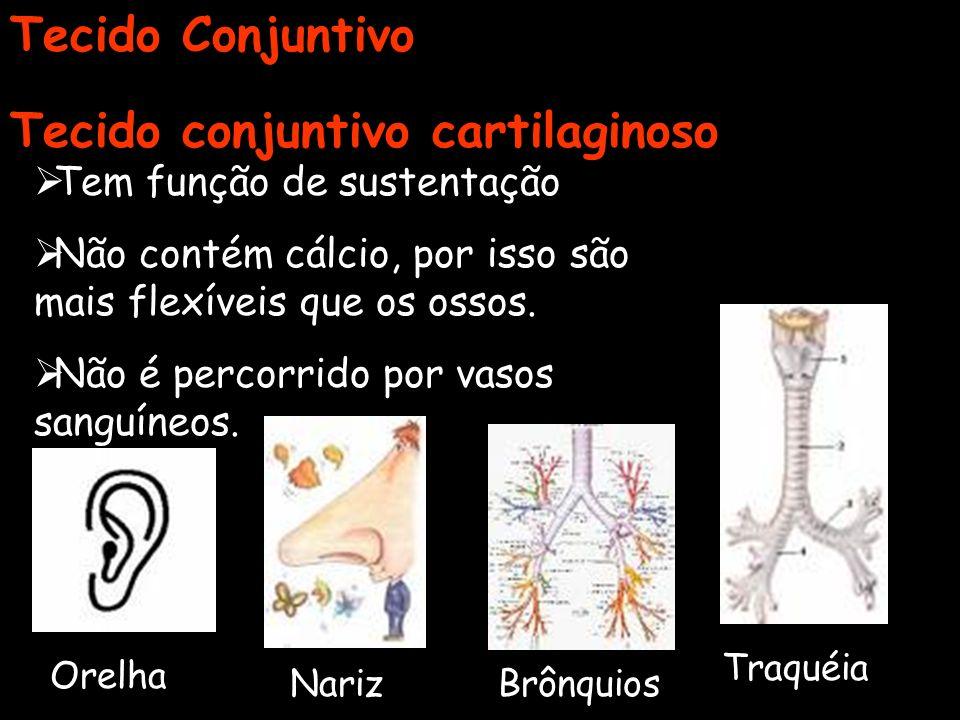Tecido conjuntivo cartilaginoso Tem função de sustentação Não contém cálcio, por isso são mais flexíveis que os ossos. Não é percorrido por vasos sang