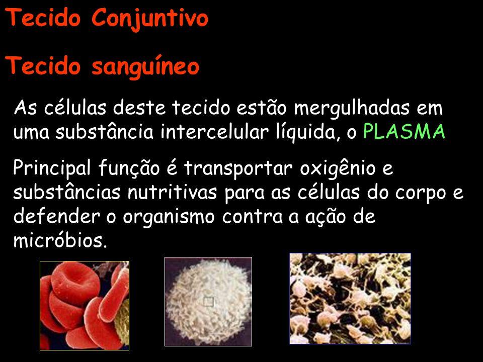 Tecido Conjuntivo Tecido sanguíneo As células deste tecido estão mergulhadas em uma substância intercelular líquida, o PLASMA Principal função é trans