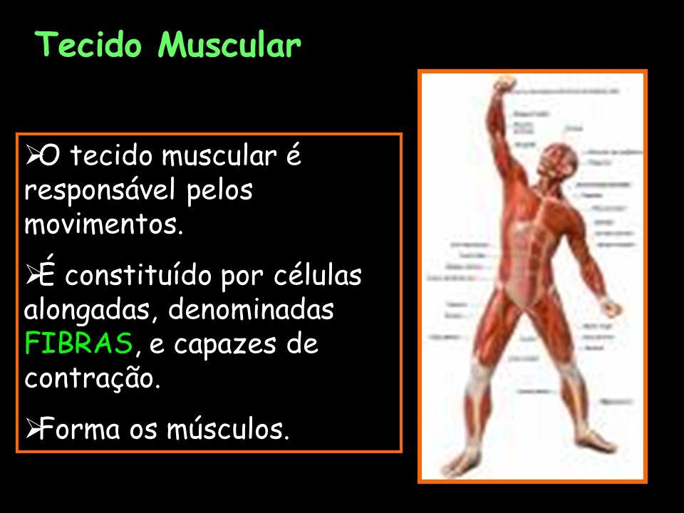 Tecido Muscular O tecido muscular é responsável pelos movimentos. É constituído por células alongadas, denominadas FIBRAS, e capazes de contração. For
