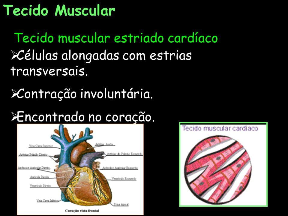 Tecido Muscular Tecido muscular estriado cardíaco Células alongadas com estrias transversais. Contração involuntária. Encontrado no coração.