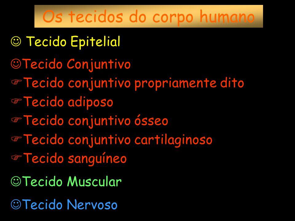 Os tecidos do corpo humano Tecido Epitelial Tecido Conjuntivo Tecido conjuntivo propriamente dito Tecido adiposo Tecido conjuntivo ósseo Tecido conjun