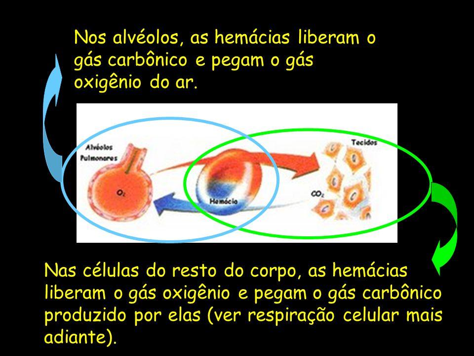 Nas células do resto do corpo, as hemácias liberam o gás oxigênio e pegam o gás carbônico produzido por elas (ver respiração celular mais adiante). No