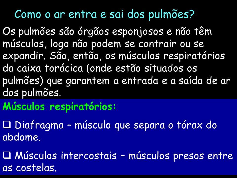 Como o ar entra e sai dos pulmões? Os pulmões são órgãos esponjosos e não têm músculos, logo não podem se contrair ou se expandir. São, então, os músc