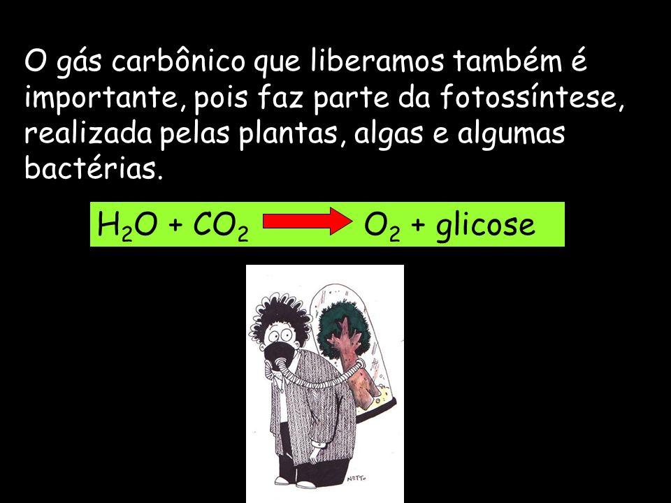 O gás carbônico que liberamos também é importante, pois faz parte da fotossíntese, realizada pelas plantas, algas e algumas bactérias. H 2 O + CO 2 O
