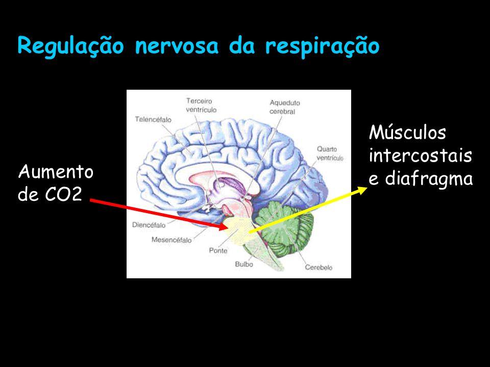 Regulação nervosa da respiração Aumento de CO2 Músculos intercostais e diafragma