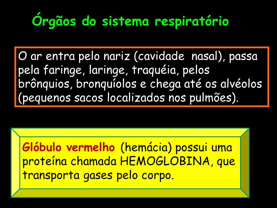 Órgãos do sistema respiratório O ar entra pelo nariz (cavidade nasal), passa pela faringe, laringe, traquéia, pelos brônquios, bronquíolos e chega até os alvéolos (pequenos sacos localizados nos pulmões).
