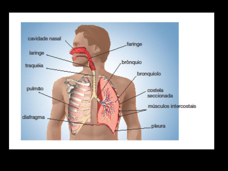 Como o ar entra e sai dos pulmões.