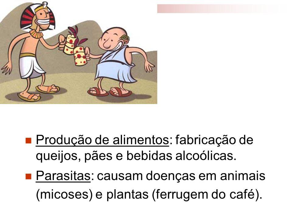 Produção de alimentos: fabricação de queijos, pães e bebidas alcoólicas. Parasitas: causam doenças em animais (micoses) e plantas (ferrugem do café).