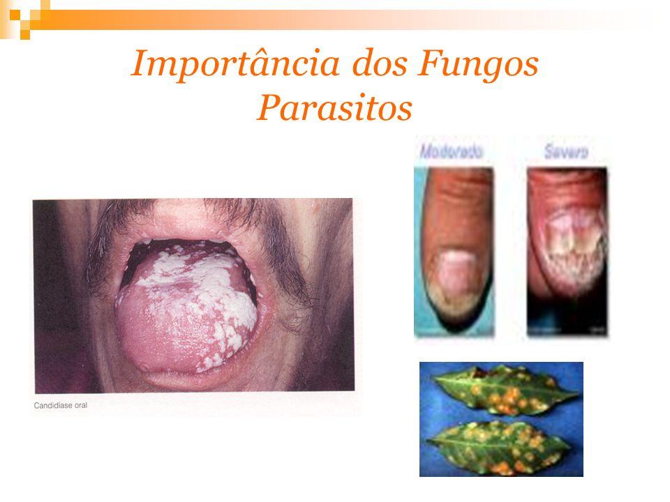 Importância dos Fungos Parasitos
