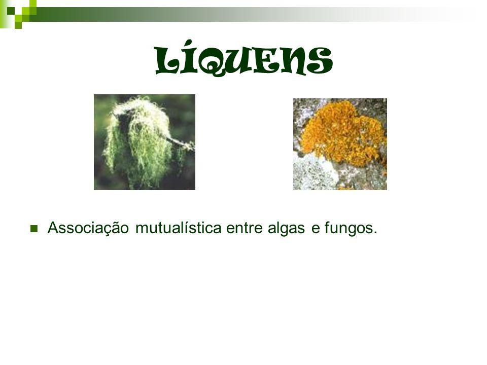 LÍQUENS Associação mutualística entre algas e fungos.