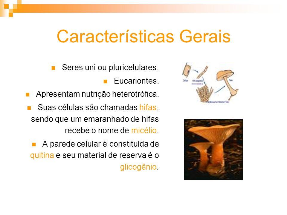 Características Gerais Seres uni ou pluricelulares. Eucariontes. Apresentam nutrição heterotrófica. Suas células são chamadas hifas, sendo que um emar