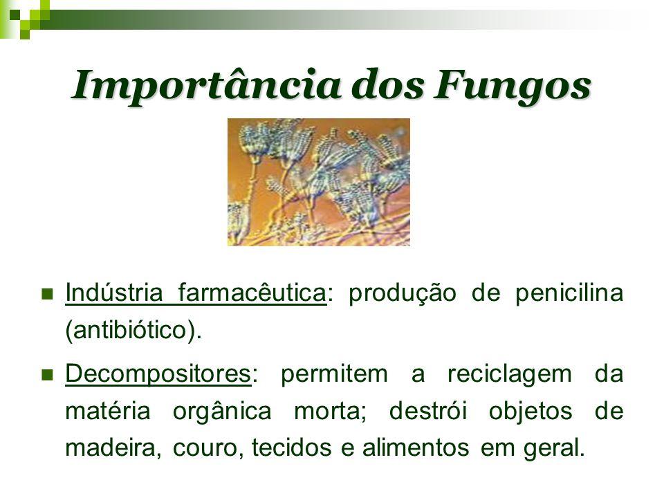 Importância dos Fungos Indústria farmacêutica: produção de penicilina (antibiótico). Decompositores: permitem a reciclagem da matéria orgânica morta;