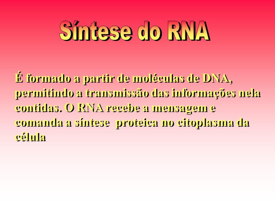 É formado a partir de moléculas de DNA, permitindo a transmissão das informações nela contidas. O RNA recebe a mensagem e comanda a síntese proteica n