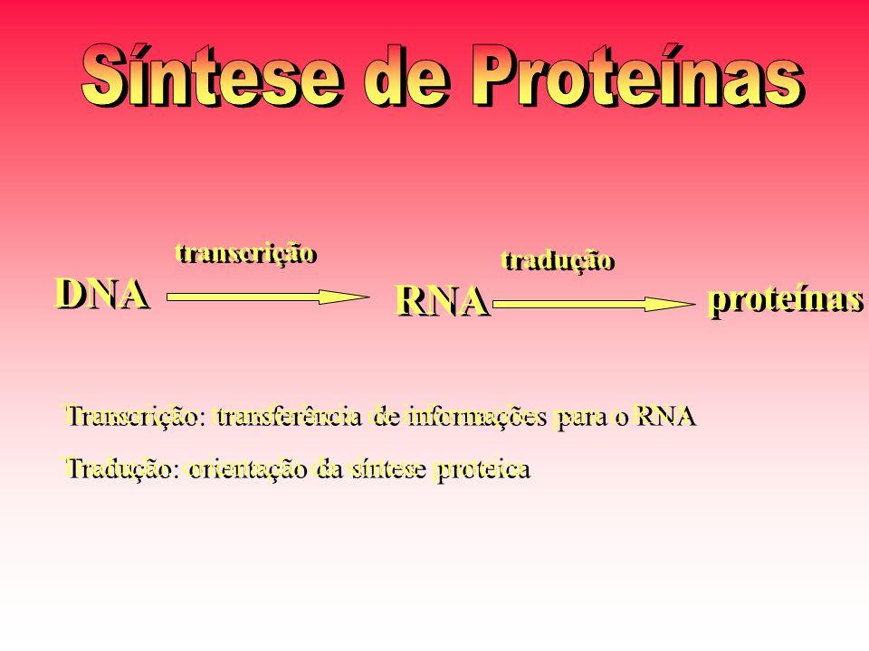 DNA RNA proteínas transcrição tradução Transcrição: transferência de informações para o RNA Tradução: orientação da síntese proteica Transcrição: transferência de informações para o RNA Tradução: orientação da síntese proteica
