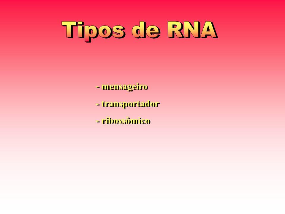 - mensageiro - transportador - ribossômico - mensageiro - transportador - ribossômico