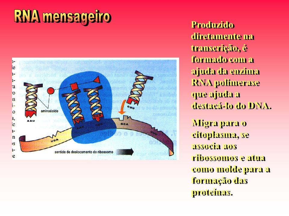Produzido diretamente na transcrição, é formado com a ajuda da enzima RNA polimerase que ajuda a destacá-lo do DNA.
