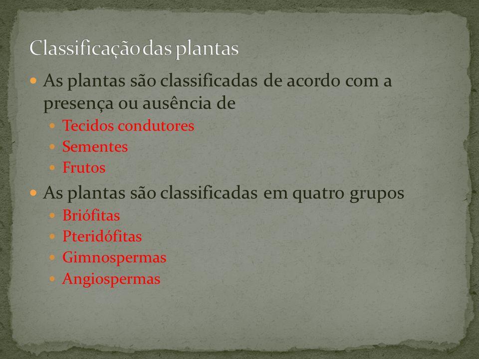 As plantas são classificadas de acordo com a presença ou ausência de Tecidos condutores Sementes Frutos As plantas são classificadas em quatro grupos