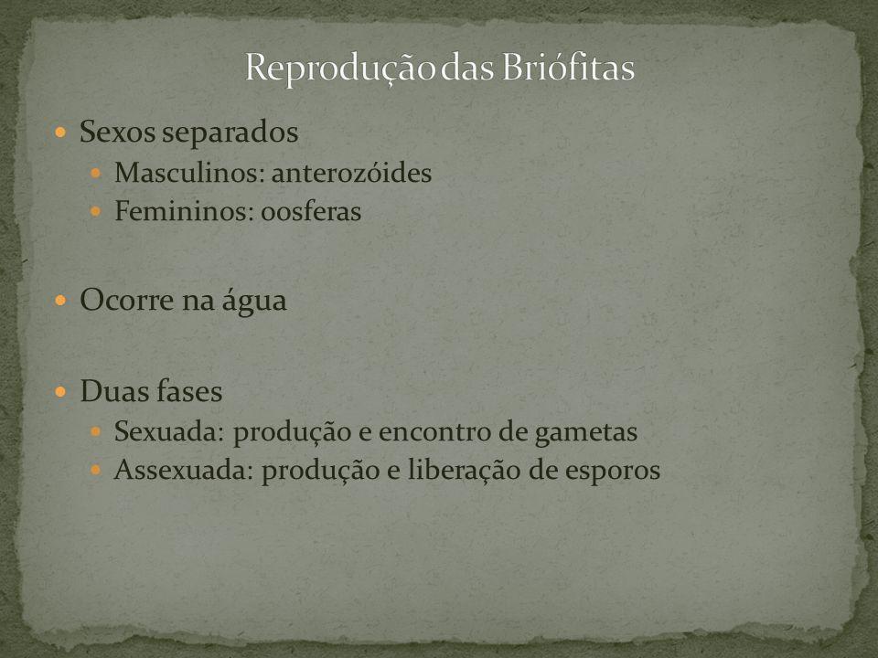 Sexos separados Masculinos: anterozóides Femininos: oosferas Ocorre na água Duas fases Sexuada: produção e encontro de gametas Assexuada: produção e l