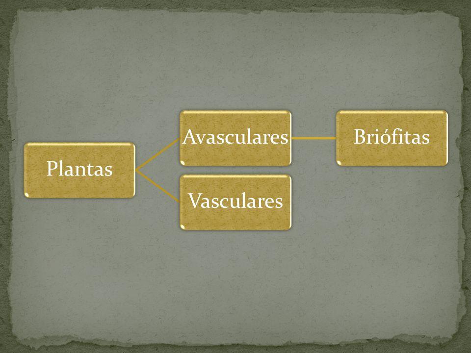 PlantasAvascularesBriófitasVasculares