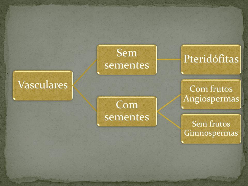 Hermafroditas Duas fases Assexuada: Mais visível Formação de soros, que abrigam os esporos Sexuada Formação do prótalo, estrutura hermafrodita que contém os gametas Autofecundação