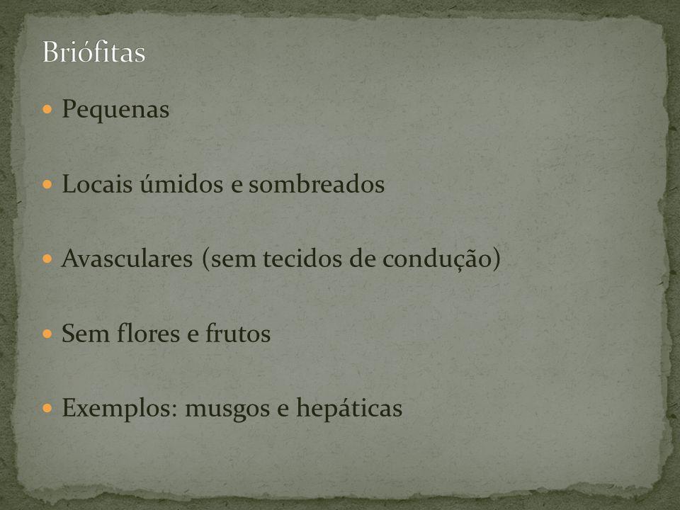 Pequenas Locais úmidos e sombreados Avasculares (sem tecidos de condução) Sem flores e frutos Exemplos: musgos e hepáticas