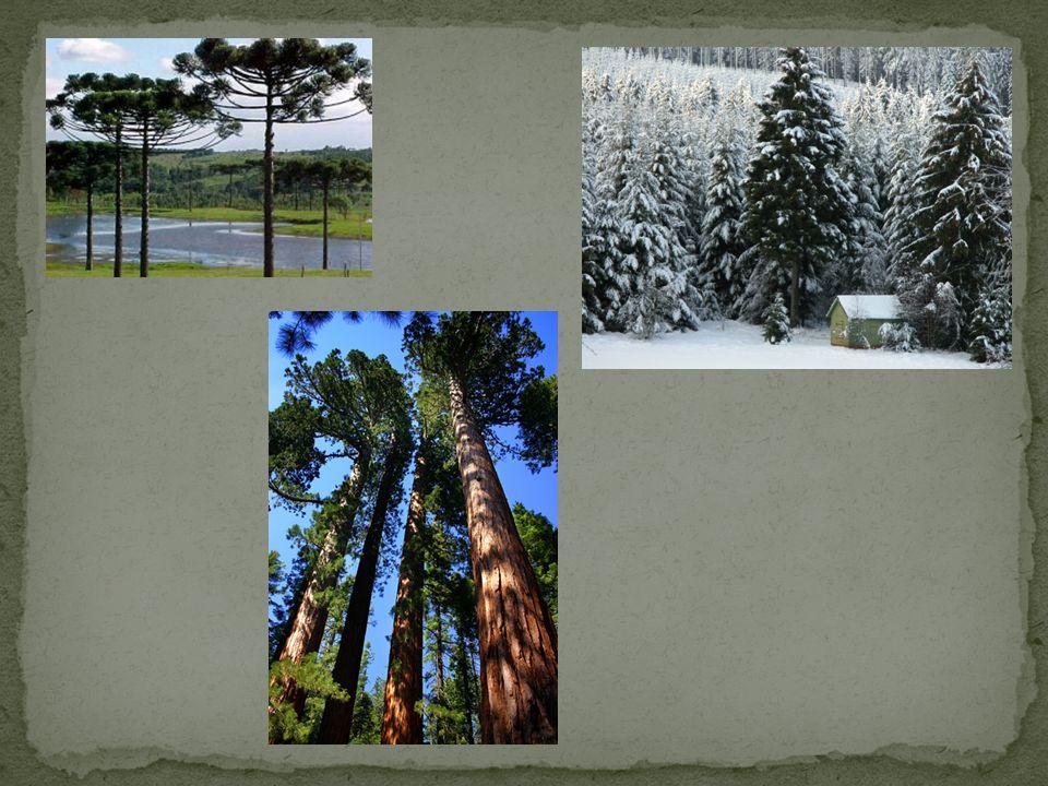 Diversos tamanhos Diversos ambientes Vasculares Flores e frutos Exemplos: ipês, paineiras, árvores frutíferas...