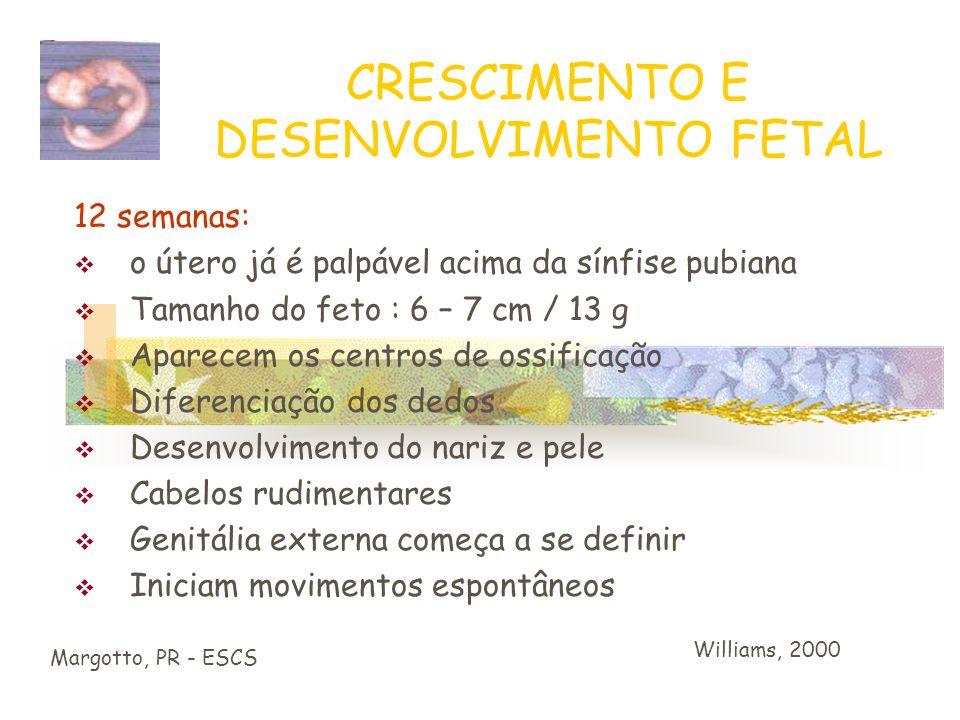 CRESCIMENTO E DESENVOLVIMENTO FETAL Margotto, PR - ESCS Período Fetal : 9ª sem após a fertilização ou 10ª sem. após a DUM 4 cm de comprimento O desenv