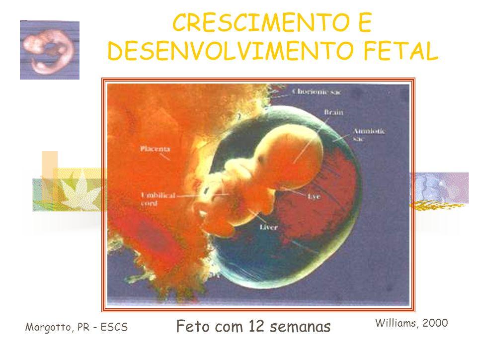 CRESCIMENTO E DESENVOLVIMENTO FETAL 12 semanas: o útero já é palpável acima da sínfise pubiana Tamanho do feto : 6 – 7 cm / 13 g Aparecem os centros d