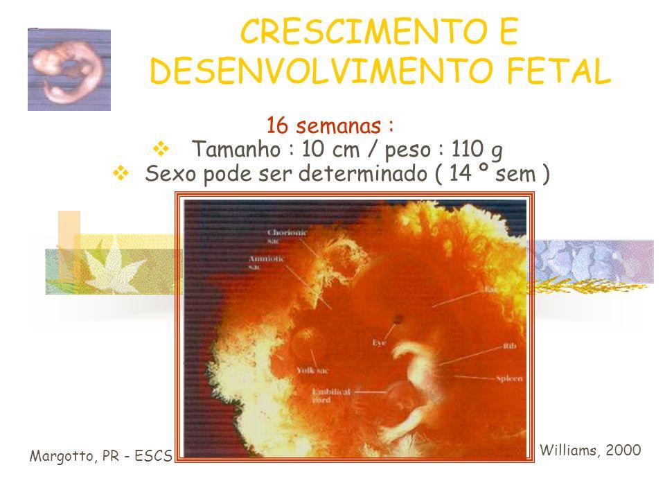 CRESCIMENTO E DESENVOLVIMENTO FETAL Margotto, PR - ESCS Williams, 2000 Feto com 12 semanas