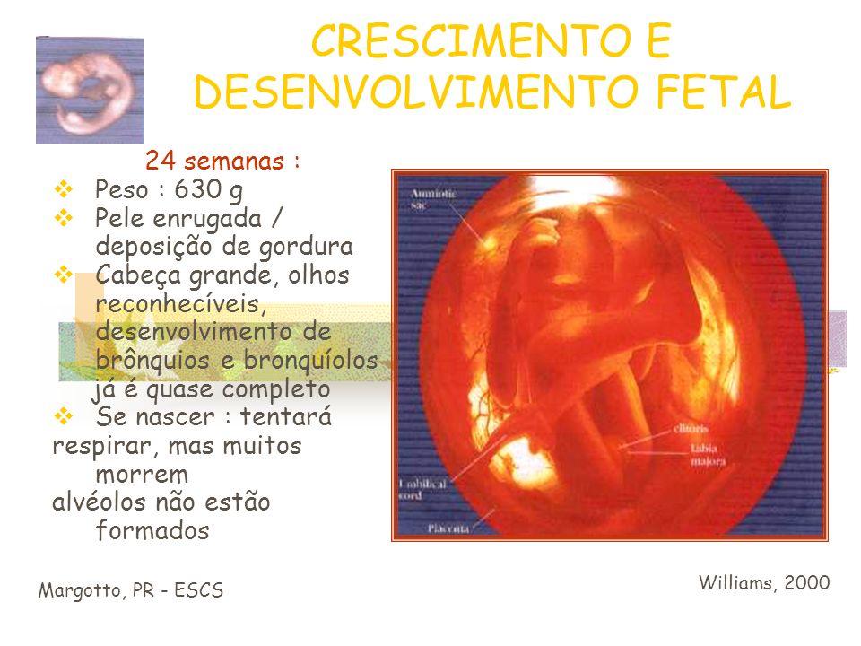 CRESCIMENTO E DESENVOLVIMENTO FETAL Margotto, PR - ESCS Williams, 2000 20 semanas : Tamanho : 22 cm peso : 300 g Pele menos transparente Cabelo começa