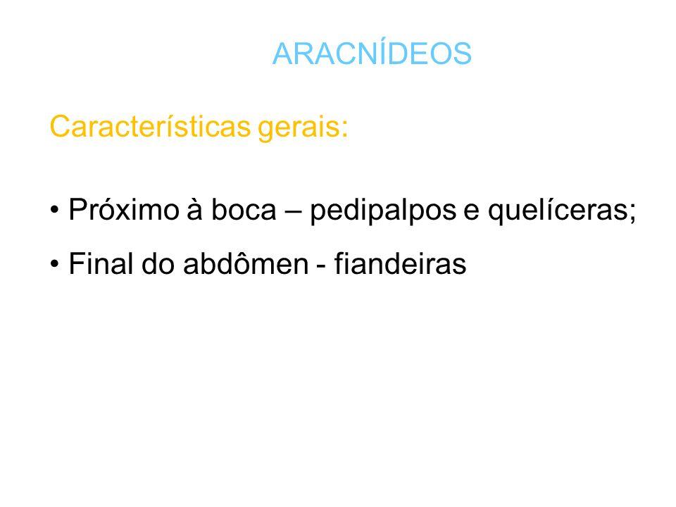 Aracnídeos cefalotórax abdome Divisão do corpo