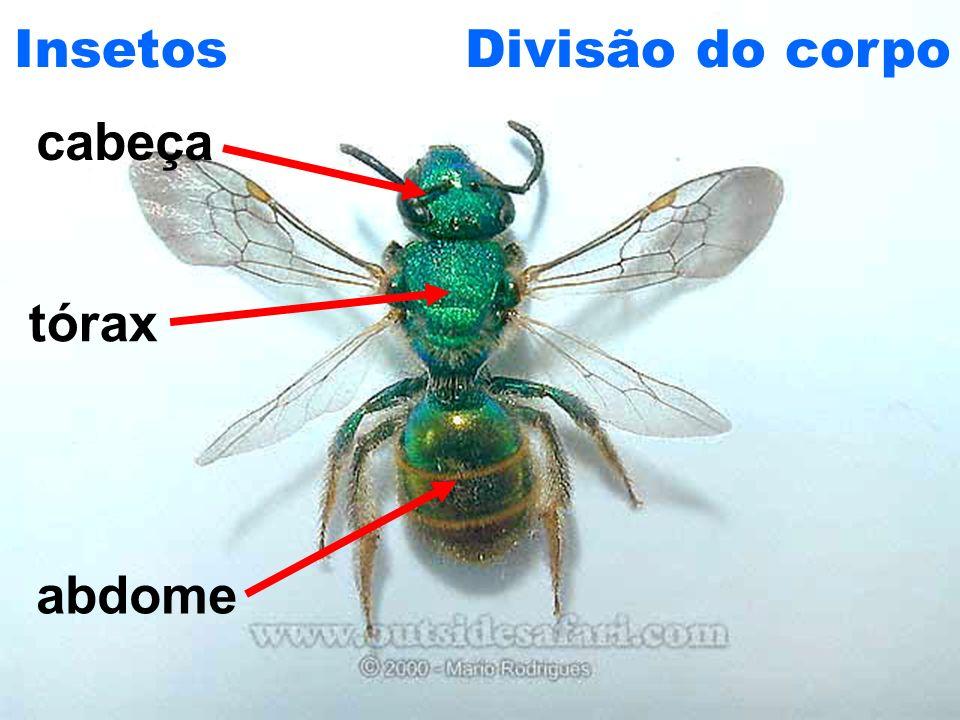 CRUSTÁCEOS Características gerais: Corpo dividido em cefalotórax e abdômen; Dois pares de antenas; Maioria com 5 pares de patas; Não possuem asas;
