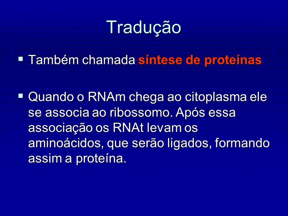 Tradução Também chamada síntese de proteínas Também chamada síntese de proteínas Quando o RNAm chega ao citoplasma ele se associa ao ribossomo.