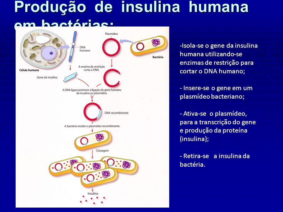 Produção de insulina humana em bactérias: -Isola-se o gene da insulina humana utilizando-se enzimas de restrição para cortar o DNA humano; - Insere-se o gene em um plasmídeo bacteriano; - Ativa-se o plasmídeo, para a transcrição do gene e produção da proteína (insulina); - Retira-se a insulina da bactéria.