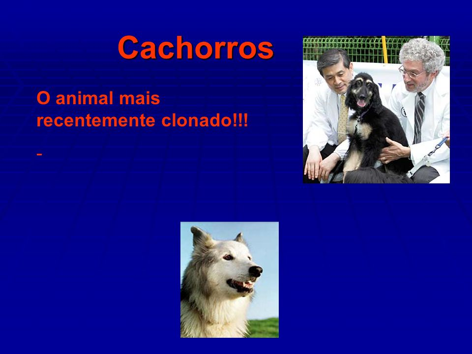 Cachorros O animal mais recentemente clonado!!! -