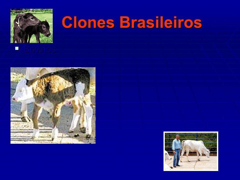 Clones Brasileiros Bovinos Bovinos