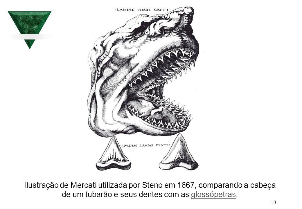 13 Ilustração de Mercati utilizada por Steno em 1667, comparando a cabeça de um tubarão e seus dentes com as glossópetras.glossópetras