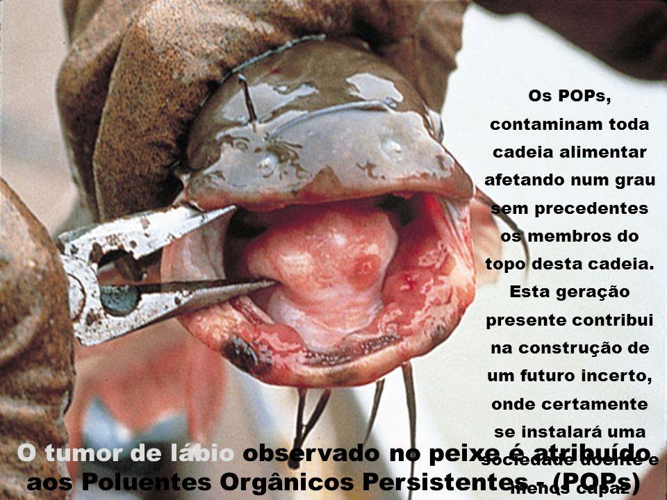 O tumor de lábio observado no peixe é atribuído aos Poluentes Orgânicos Persistentes - (POPs) Os POPs, contaminam toda cadeia alimentar afetando num g