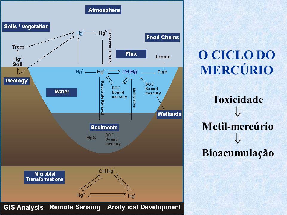 O CICLO DO MERCÚRIO Toxicidade Metil-mercúrio Bioacumulação