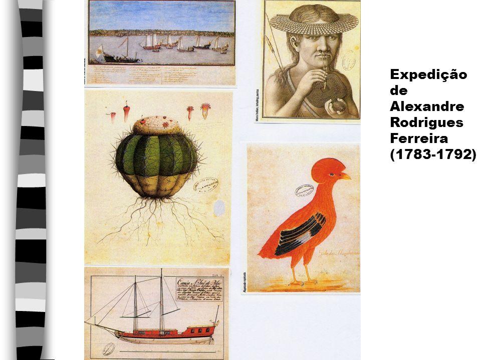 Exemplos de coletas de naturalistas estrangeiros no Brasil n Friedrich Sellow (1789 - 1831): viagem ao Brasil de 1814 a 1828, c/ financiamento da Grã-Bretanha, Prússia e Portugal (Brasil) n Coleções do Museu de Berlim = 276 mamíferos, 4.945 pássaros, 80.834 insetos, 23 caixas de rochas e minerais, 39 caixas c/ plantas, 1 coleção de madeiras n Coleções do Museu Nacional = 9 caixas de amostras diversas