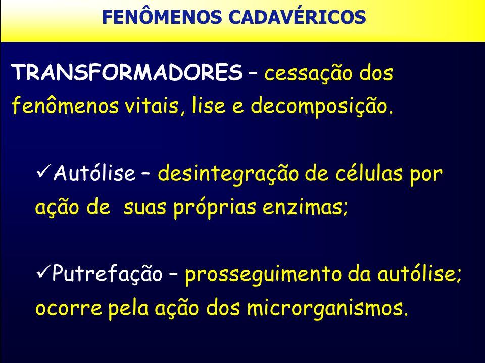 TRANSFORMADORES – cessação dos fenômenos vitais, lise e decomposição. Autólise – desintegração de células por ação de suas próprias enzimas; Putrefaçã