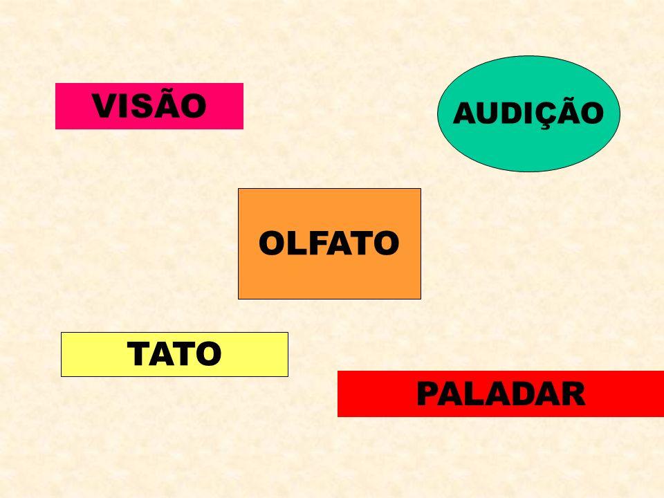 VISÃO AUDIÇÃO OLFATO PALADAR TATO