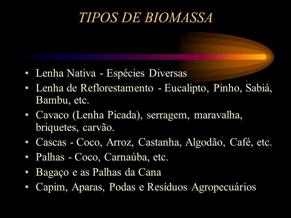 TIPOS DE BIOMASSA Lenha Nativa - Espécies Diversas Lenha de Reflorestamento - Eucalipto, Pinho, Sabiá, Bambu, etc.