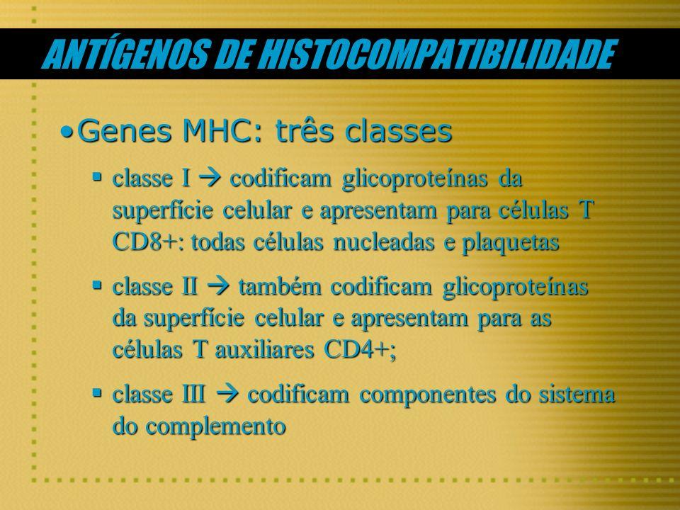 ANTÍGENOS DE HISTOCOMPATIBILIDADE Genes MHC: três classesGenes MHC: três classes classe I codificam glicoproteínas da superfície celular e apresentam