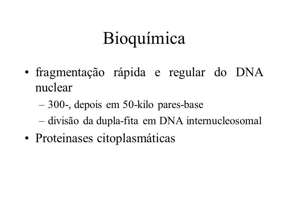 Bioquímica fragmentação rápida e regular do DNA nuclear –300-, depois em 50-kilo pares-base –divisão da dupla-fita em DNA internucleosomal Proteinases